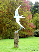 The Swift @ Himalayan garden and sculpture park, Grewelthorpe � Paul Bartlett r