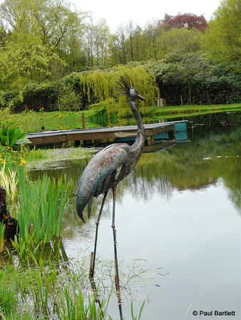 Stork @ Himalayan garden and sculpture park, Grewelthorpe � Paul Bartlett [1r]