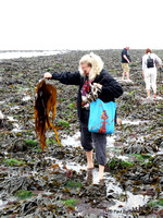 Julie with seaweed Flamborough South Landing 12-07-2014  � Paul Bartlett [w]